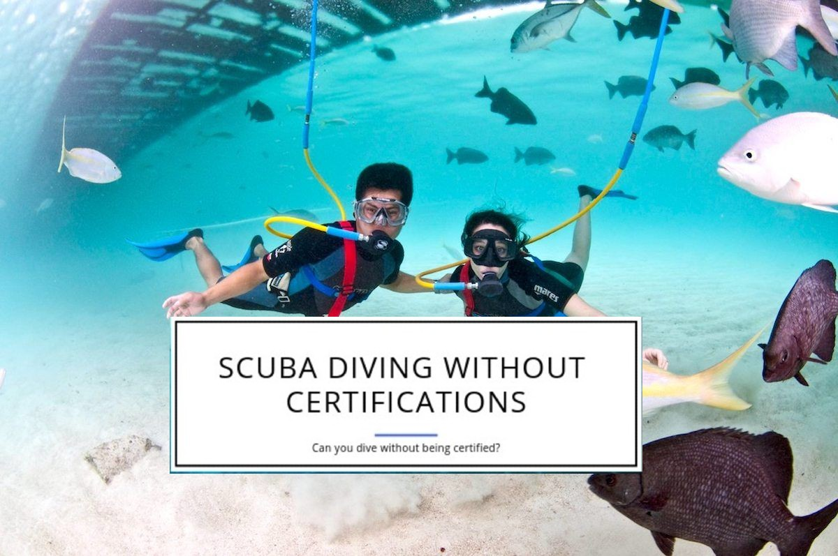 Can you dive without being certified or not